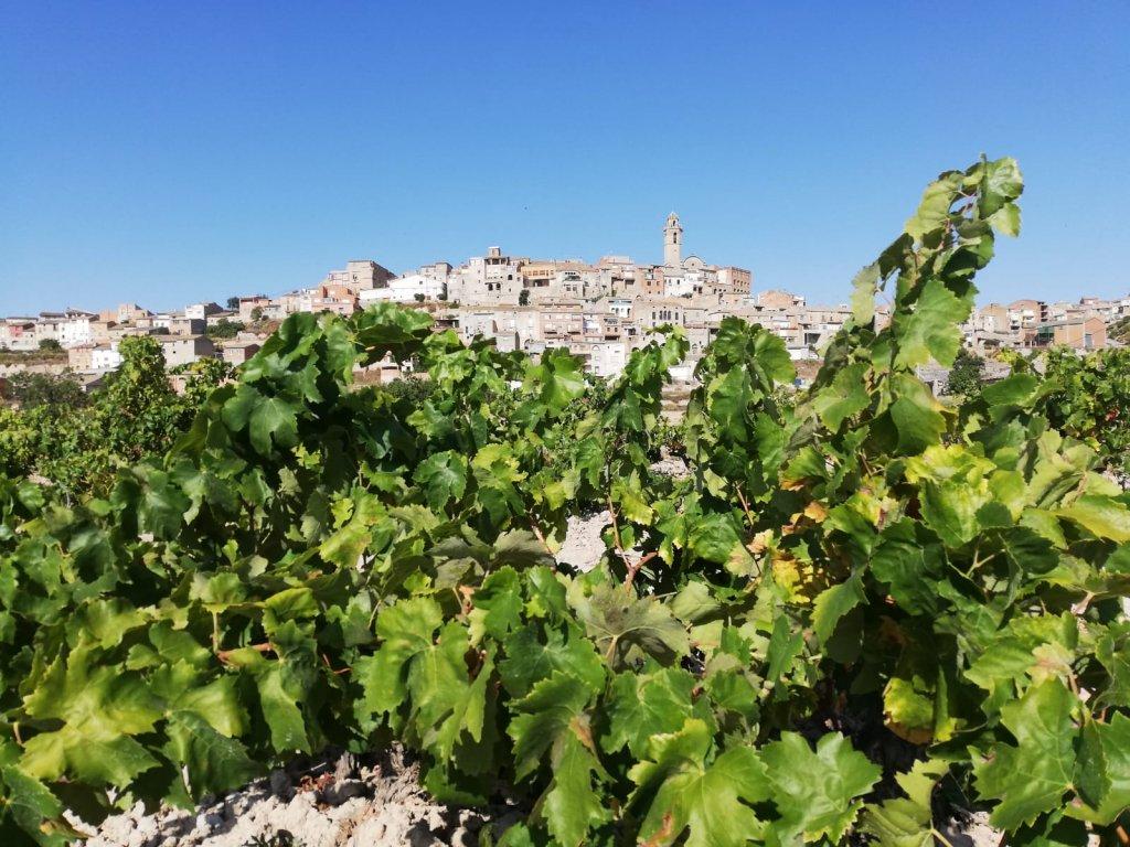 Maldà Foto de Sebastia Mata
