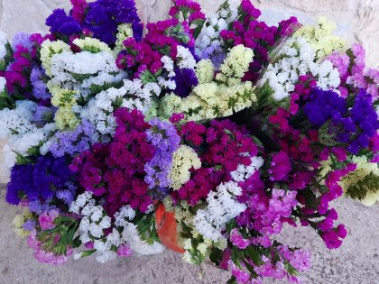flors pons plus